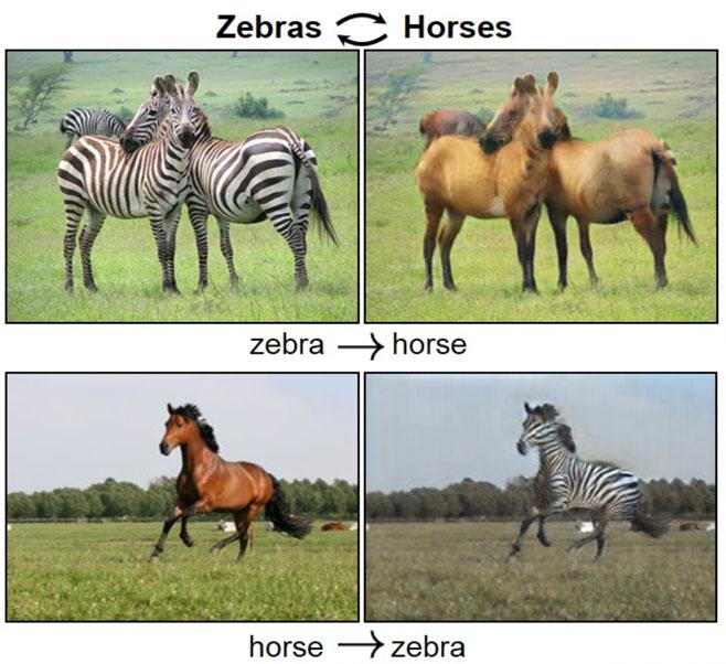 zebra-horses